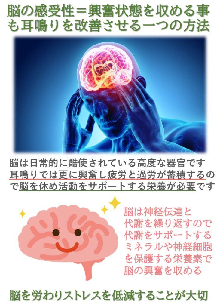 耳鳴り治療では難聴によって興奮状態に陥る脳の興奮を収めることも重要です。